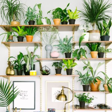 Indoor Plants 110