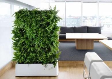 Indoor Plants 24