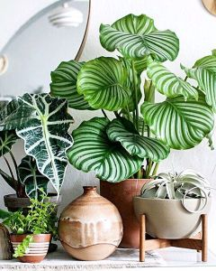 Indoor Plants 25