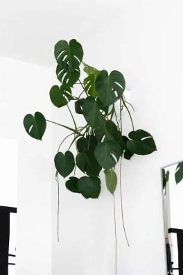 Indoor Plants 37