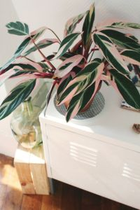 Indoor Plants 49