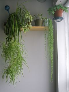Indoor Plants 5