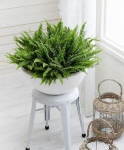 Indoor Plants 84