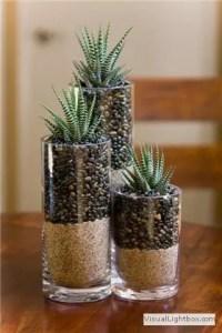 Indoor Plants 91