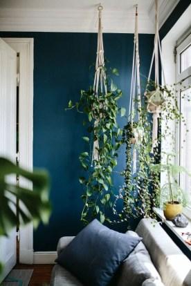 Indoor Plants 92