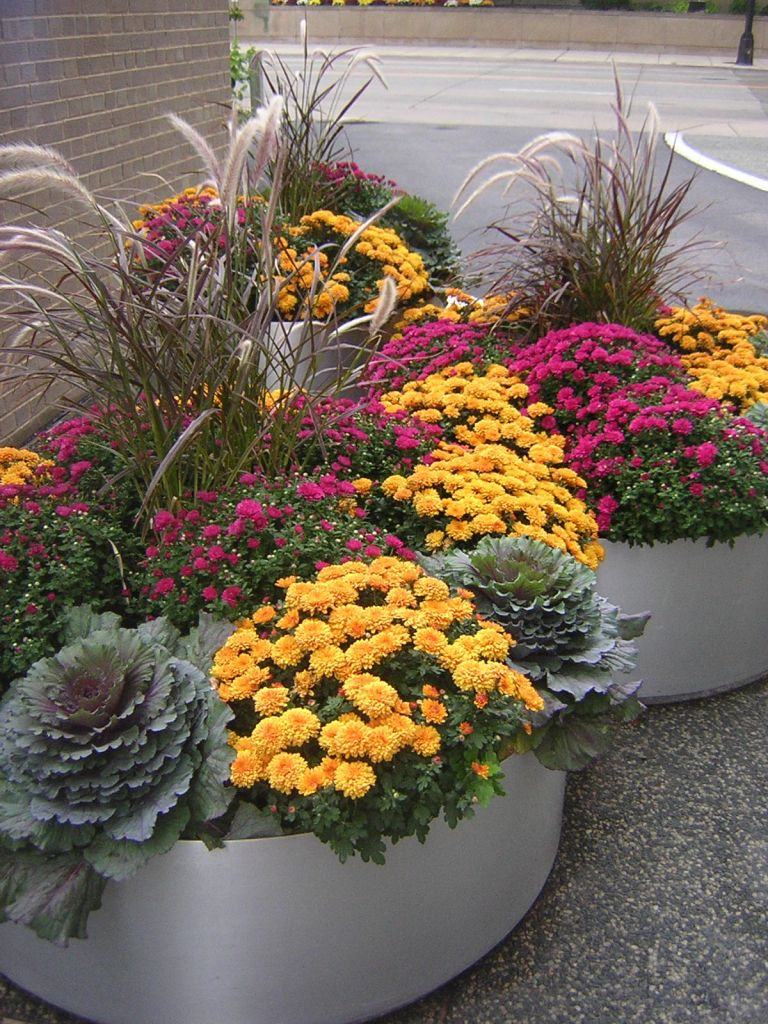 Fall Flowers To Plant 15
