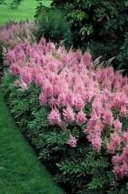 Flower Garden Ideas 11