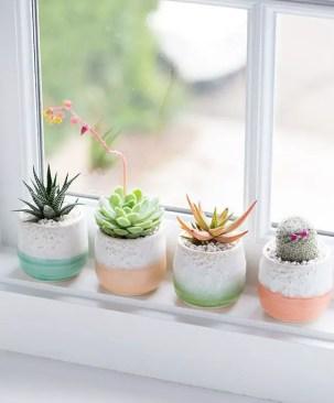 Succulents 14