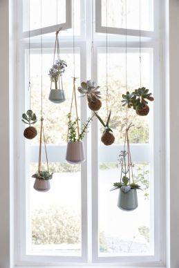 Succulents 23