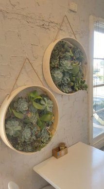 Succulents 24