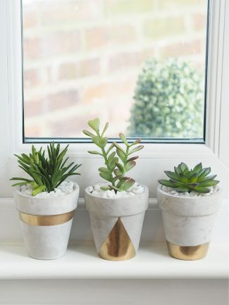 Succulents 27