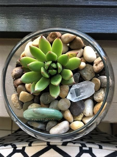 Succulents 6