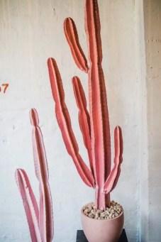Cactus Aesthetic 1