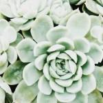 Cactus Aesthetic 17