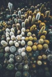 Cactus Aesthetic 20