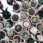 Cactus Aesthetic 23