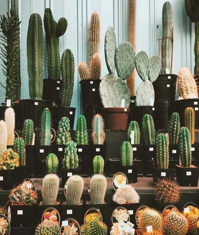 Cactus Aesthetic 3