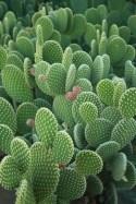 Cactus Aesthetic 9