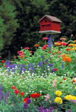 Cottage Garden Front Yard 18
