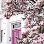 Magnolia House Garden 11