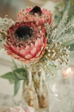 Protea Flower 39