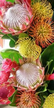 Protea Flower 40