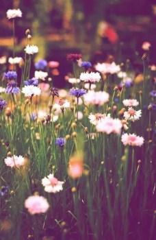 Wildflower Field 13