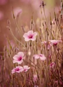 Wildflower Field 14
