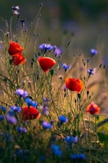 Wildflower Field 4
