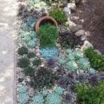 Succulent Design 34