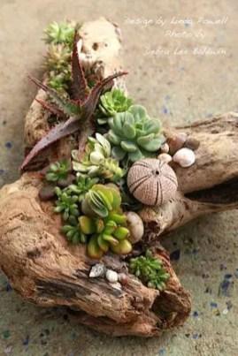Succulent Design 37