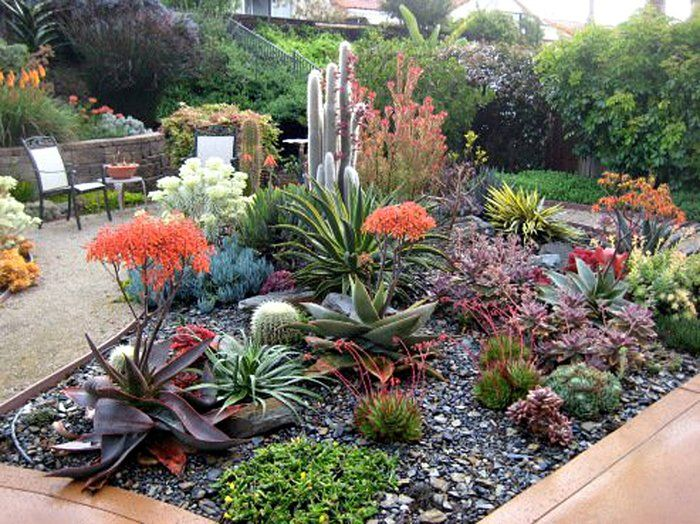 Succulent Design 39