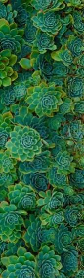 Succulent Design 9