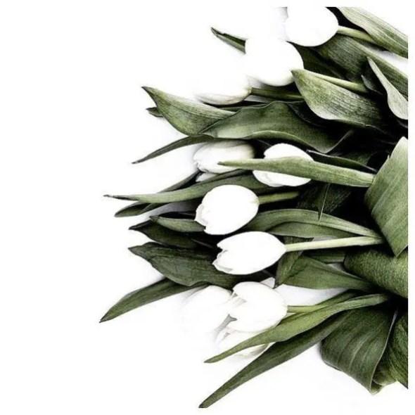 White Tulips 22