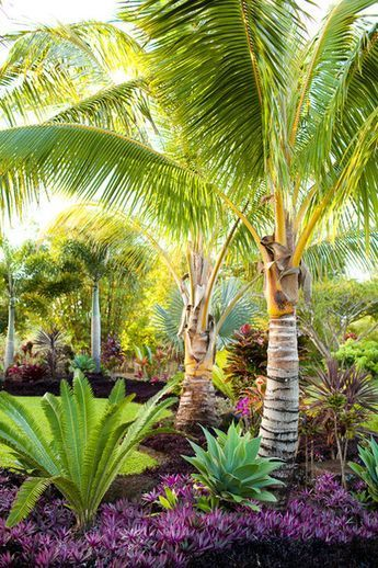 Tropical Landscaping Ideas 8