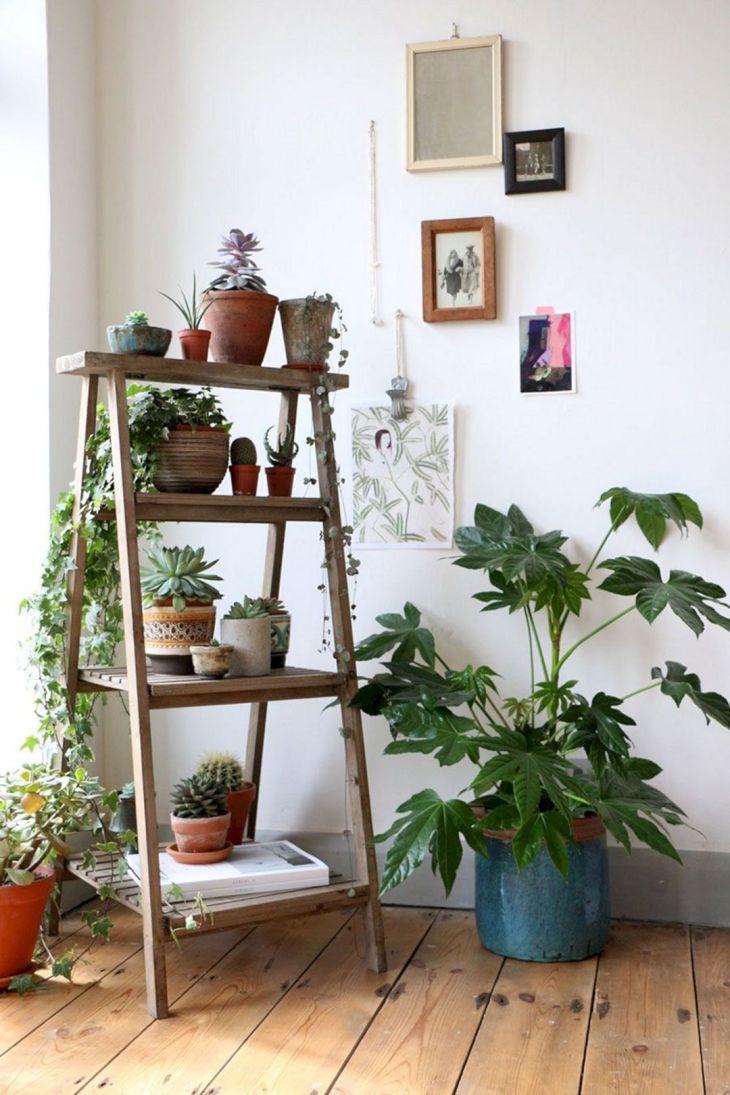 Wonderful DIY Ornamental Plants Design