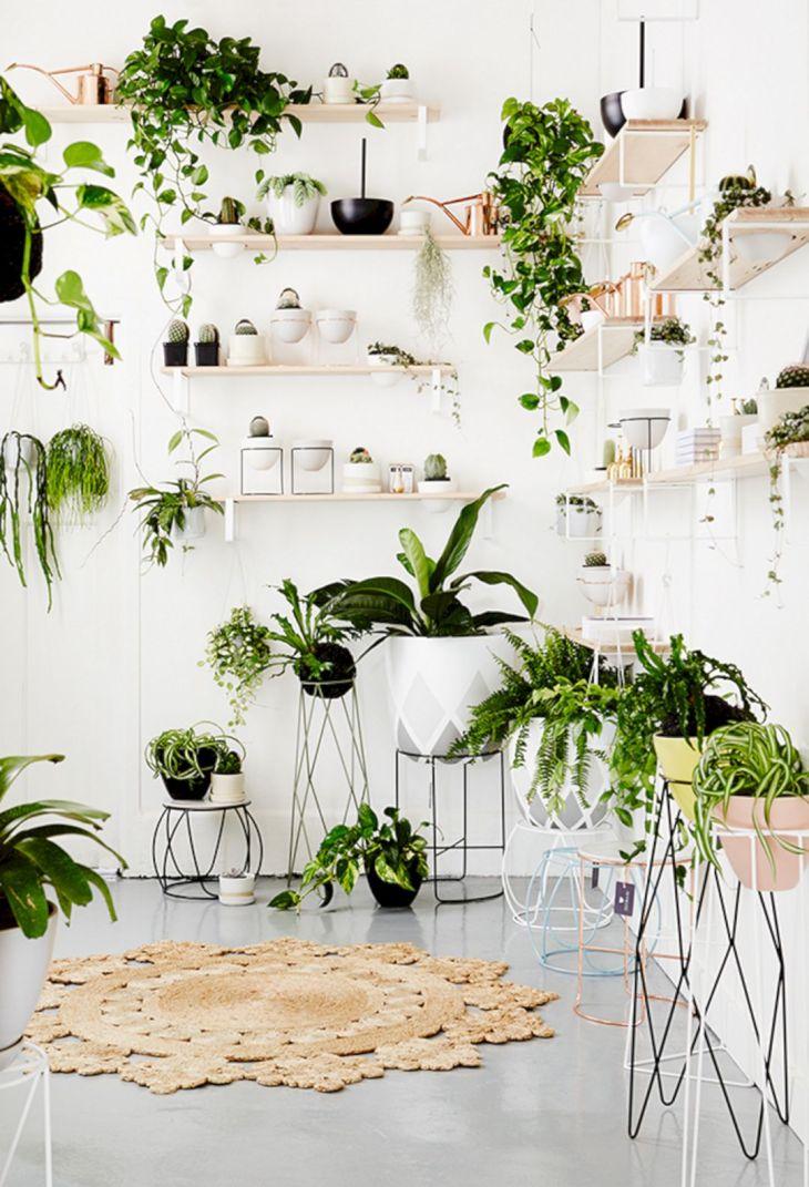 Wonderful DIY Ornamental Plants Ideas