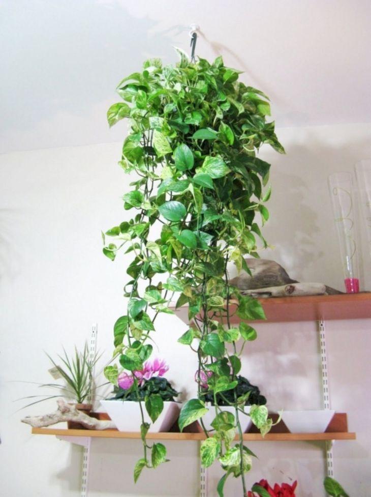 Best Design Of Ornamental Plants