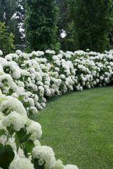 Designing a Garden With Landscape Design Principles 30