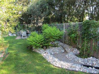 Minnesota Rain Garden Plant