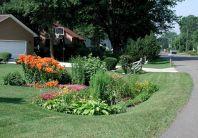 Minnesota Rain Garden Plants