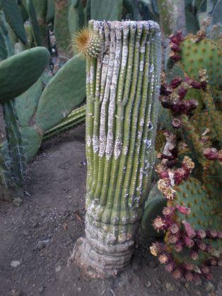 Arizona Cactus Garden Ideas