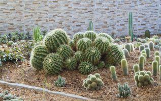 Awesome Cactus Garden Ideas