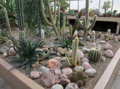 Beautiful Cactus Garden Ideas
