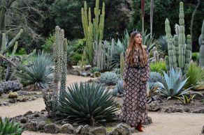 Cactus Garden Design Ideas