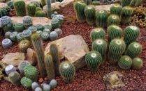 Cactus Garden Ideas Design