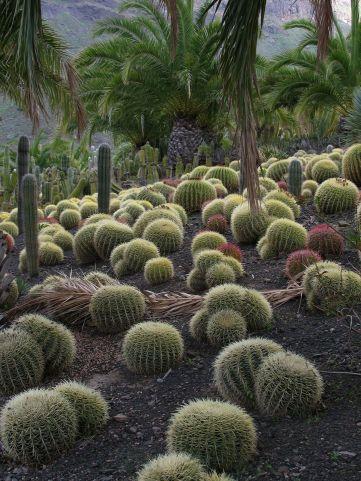Cactus Gardens
