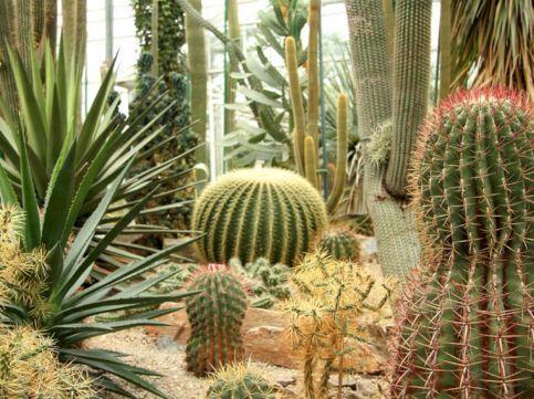 Desert Plants and Gardens