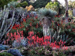 Desktop Cactus Garden