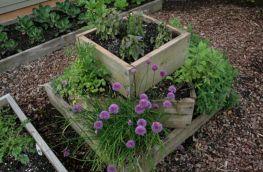 Herb Garden Design 2